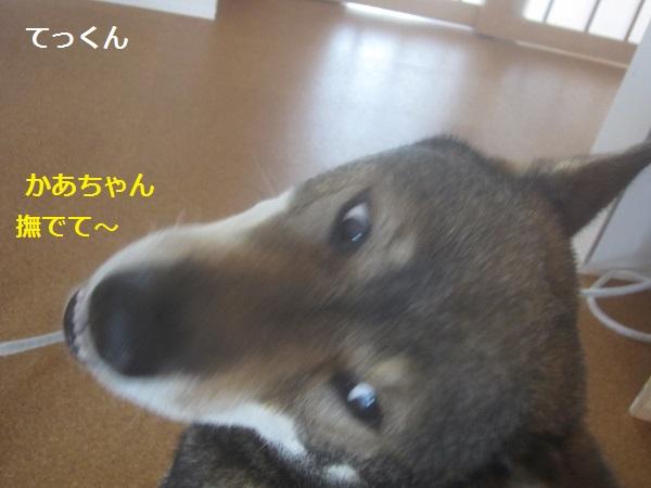 f0143123_14224599.jpg