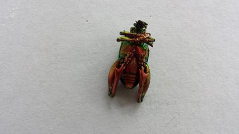 バリ島で拾った美しすぎる虫の遺体_e0155231_15581259.jpg