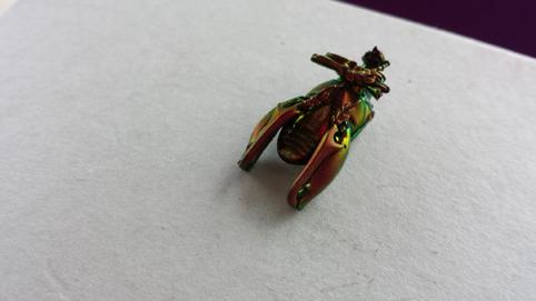 バリ島で拾った美しすぎる虫の遺体_e0155231_1558682.jpg