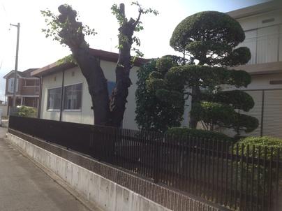 植木剪定_c0186441_015129.jpg