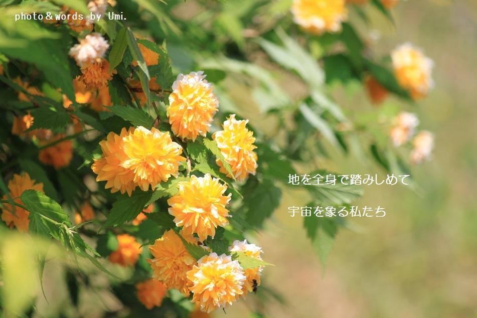 f0351844_16271130.jpg