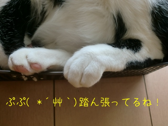 c0259945_156239.jpg