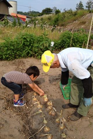 春樹のお手伝いは食材の収穫作業_f0009169_756294.png