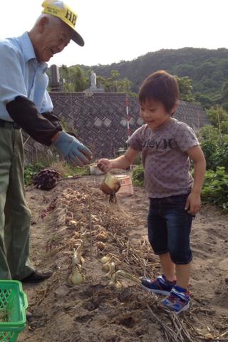 春樹のお手伝いは食材の収穫作業_f0009169_757093.png