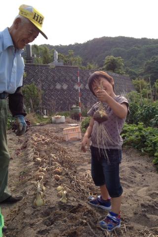 春樹のお手伝いは食材の収穫作業_f0009169_7572677.png