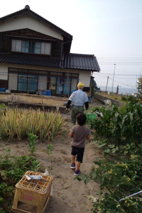 春樹のお手伝いは食材の収穫作業_f0009169_7575951.png