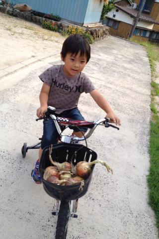 春樹のお手伝いは食材の収穫作業_f0009169_7583390.png