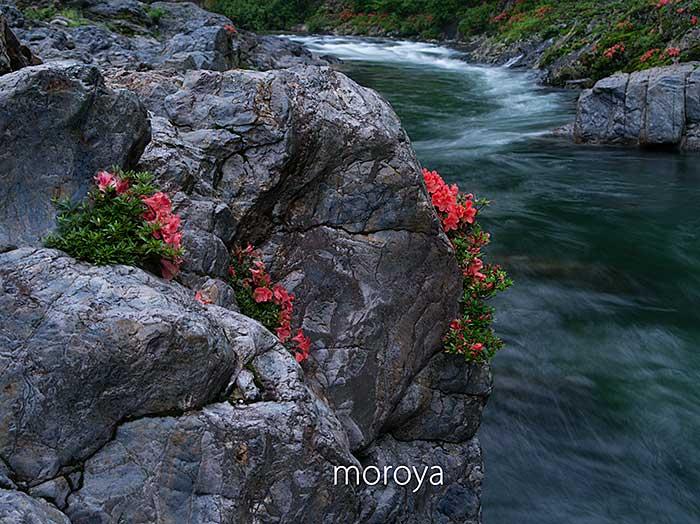 渓流に咲く_c0085877_20553680.jpg