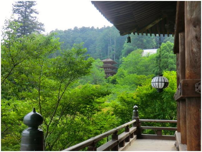 梅雨の晴れ間に長谷寺へ・・・紫陽花どやろ・・・その3、これで終わり_b0104092_1620927.jpg