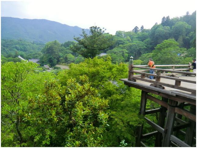 梅雨の晴れ間に長谷寺へ・・・紫陽花どやろ・・・その3、これで終わり_b0104092_16221224.jpg