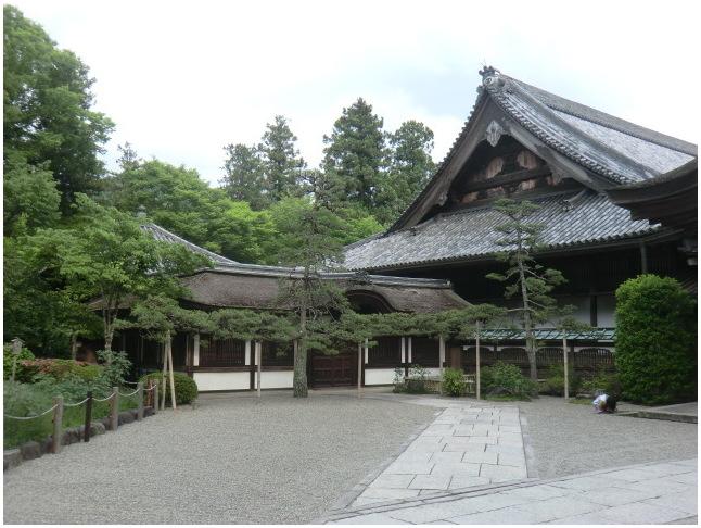 梅雨の晴れ間に長谷寺へ・・・紫陽花どやろ・・・その3、これで終わり_b0104092_16342319.jpg