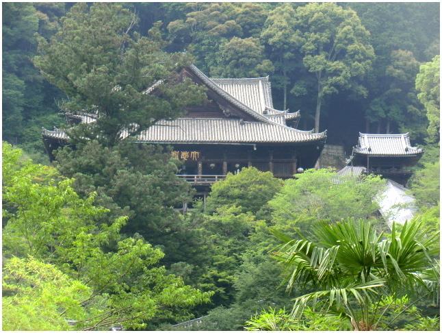 梅雨の晴れ間に長谷寺へ・・・紫陽花どやろ・・・その3、これで終わり_b0104092_16434530.jpg