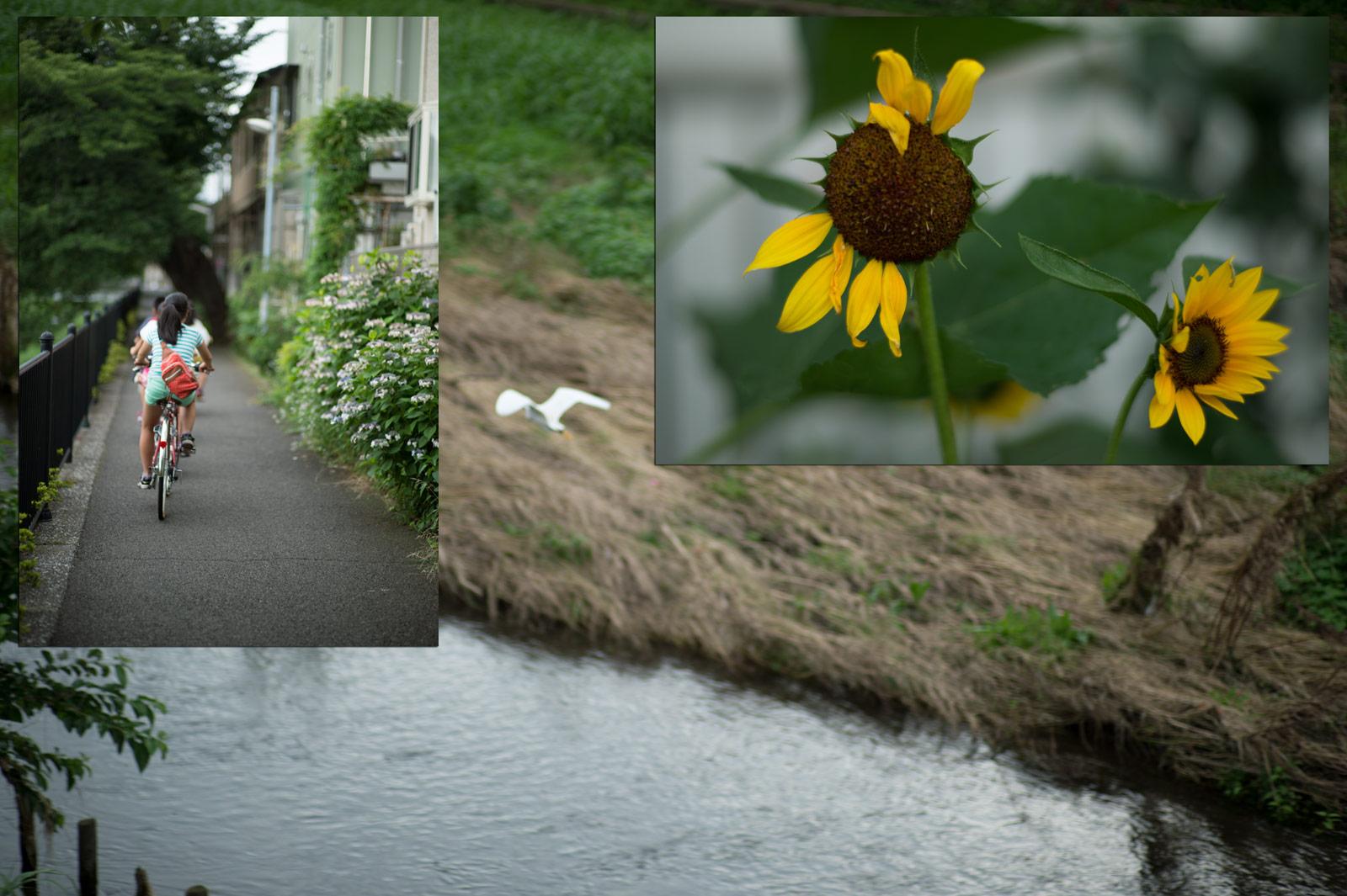 Leica M6にフィルムを入れて…_a0271402_10184460.jpg