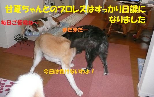 f0121712_1645656.jpg