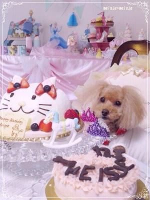 Happy Birthday☆メイシェ♪_b0014124_21553190.jpg