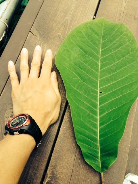 場内の植物さん_b0174425_12513097.jpg