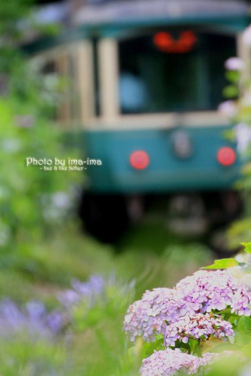 紫陽花の咲くころ。。。_b0228827_09231931.jpg