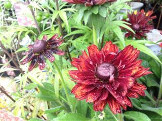 庭の日!!_c0173939_10152276.jpg
