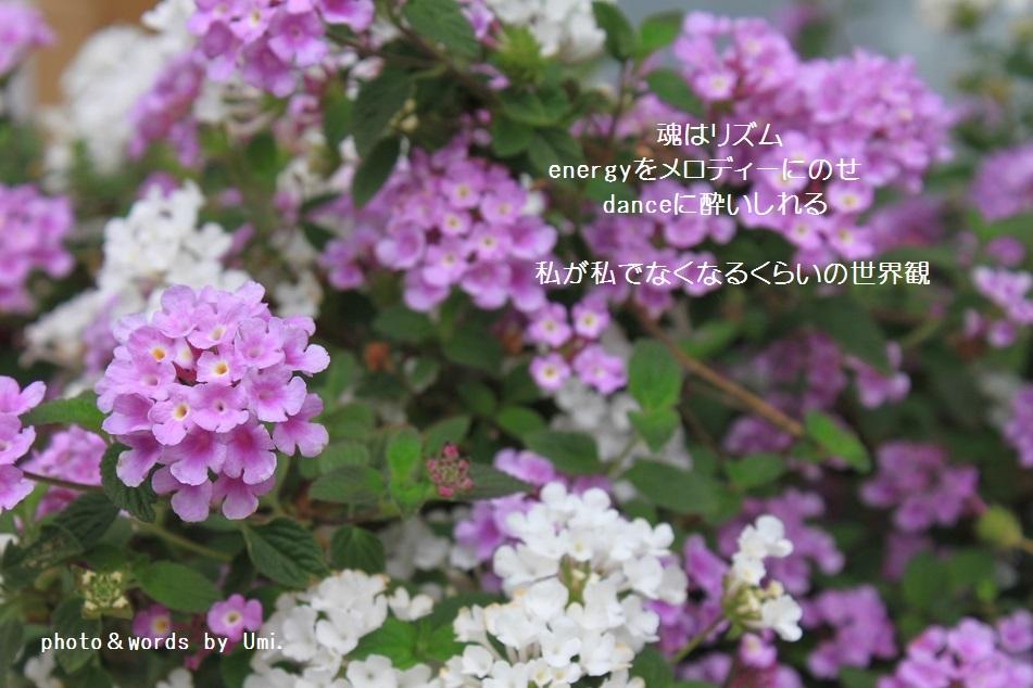 f0351844_10401358.jpg
