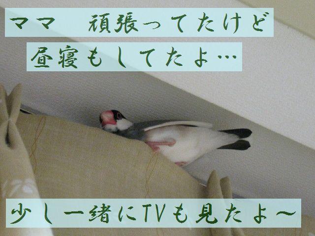 b0158061_04088.jpg