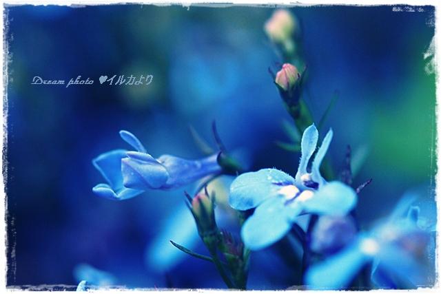 f0304384_6294398.jpg