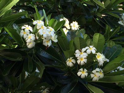 ハワイでの様子をお見せします(^_^)_d0256587_1323582.jpg