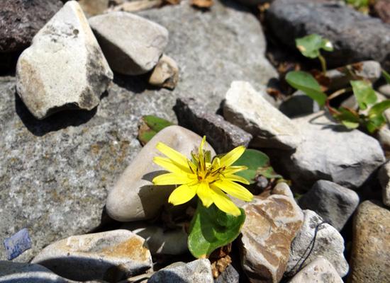 夏泊半島・大島の懐かしい花々♪_a0136293_163195.jpg