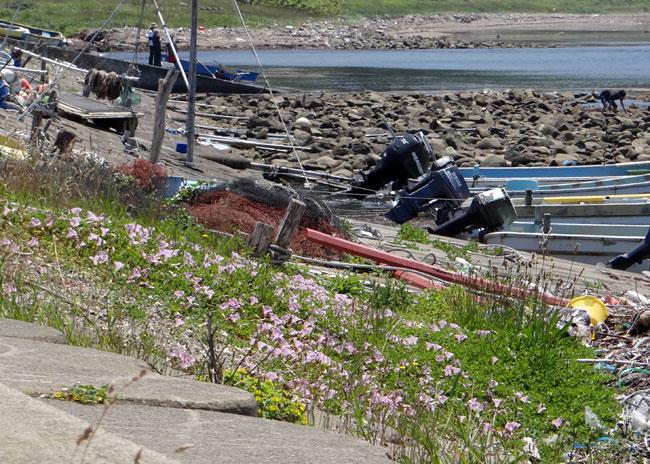 夏泊半島・大島の懐かしい花々♪_a0136293_1643751.jpg