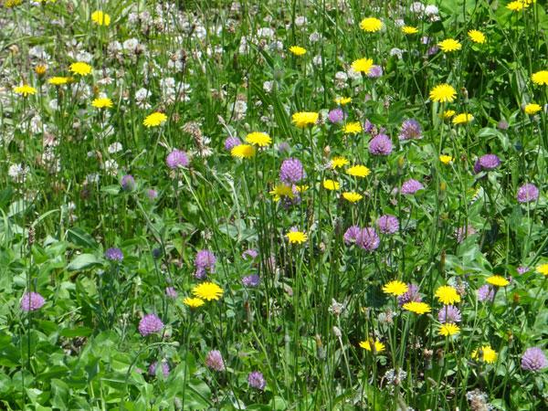 夏泊半島・大島の懐かしい花々♪_a0136293_16451679.jpg