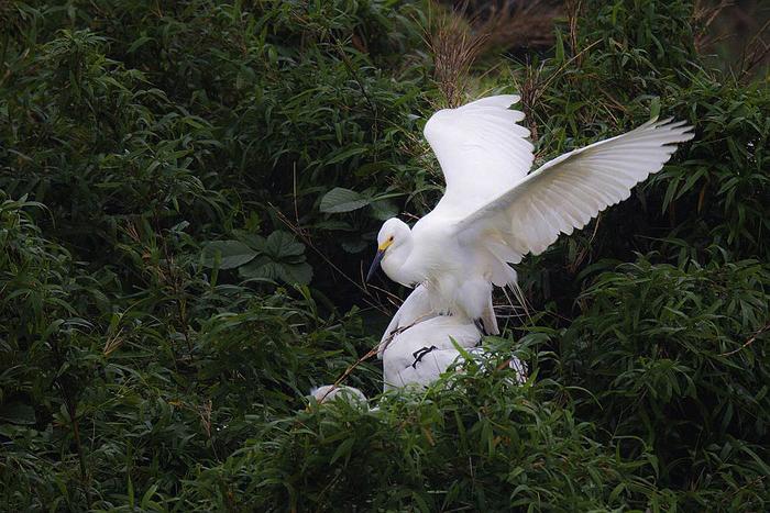 白鷺、その7_c0077395_1950201.jpg