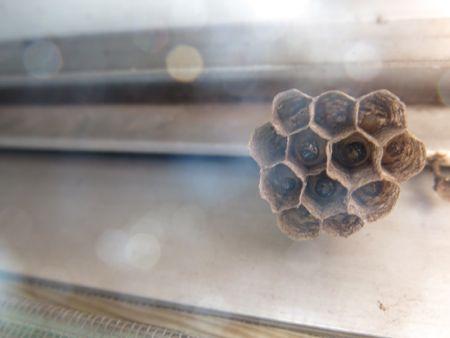 女王蜂ハチ子のその後。_c0108595_203210.jpg