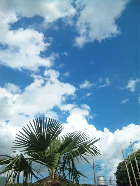 blog:まるでキューバのような_a0103940_17102429.jpg