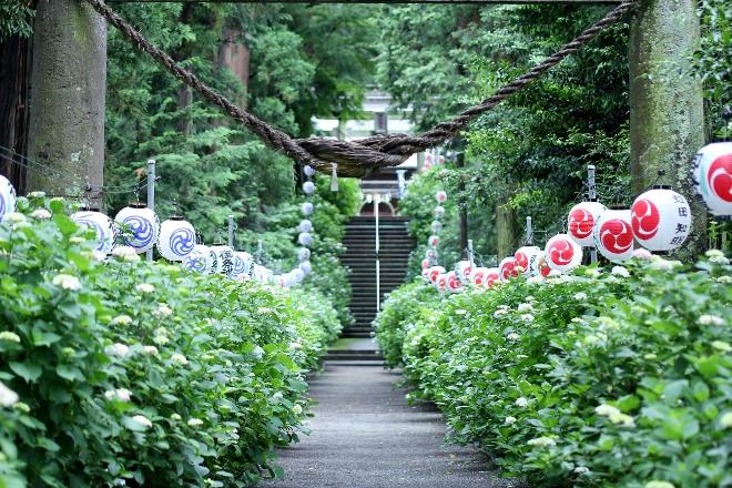 鹿沼 磯山神社のあじさい祭り2014_e0227942_23031911.jpg