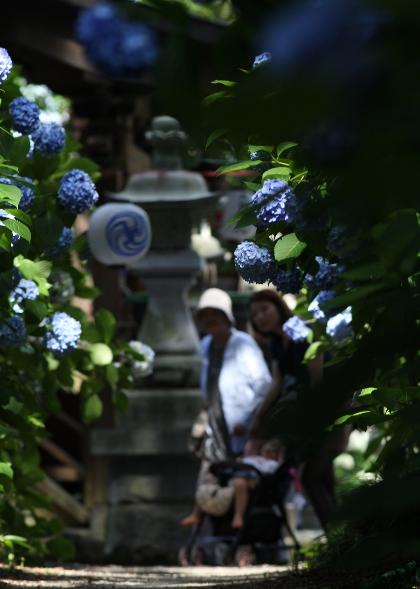 鹿沼 磯山神社のあじさい祭り2014_e0227942_23091546.jpg