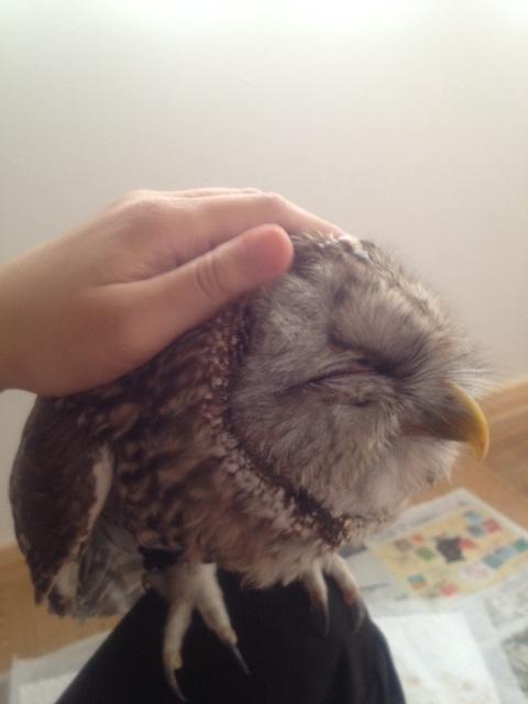 換羽期の猛禽の体調管理_c0132048_134394.jpg