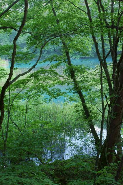 磐梯山を望む青い沼_a0257652_14503698.jpg