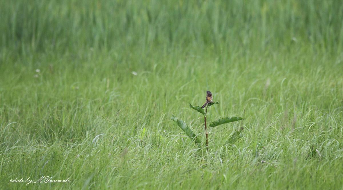 草原のソプラノ歌手_c0217255_1972467.jpg