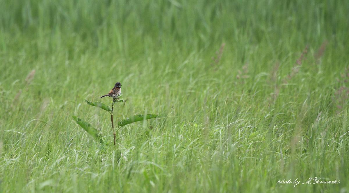 草原のソプラノ歌手_c0217255_1975683.jpg