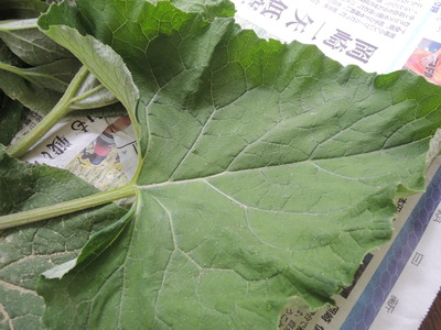 6月の奈良オーガニックマーケット_b0252363_13295455.jpg