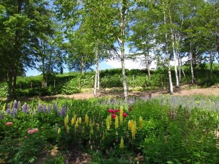 北海道ガーデンめぐりをしてきました~♪_a0243064_15122573.jpg