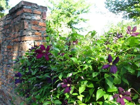 北海道ガーデンめぐりをしてきました~♪_a0243064_15414397.jpg