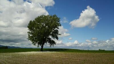 美瑛、哲学の木。_b0106766_6223678.jpg