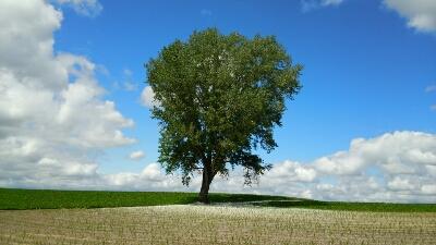 美瑛、哲学の木。_b0106766_6225461.jpg