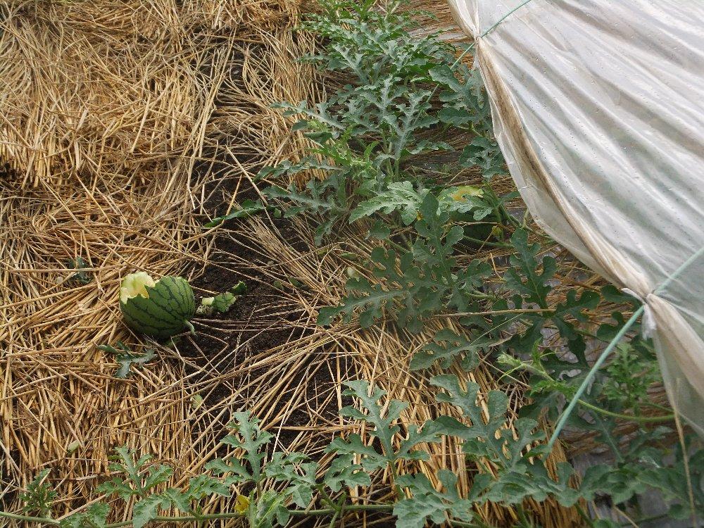 畑で働く_e0087201_23071532.jpg
