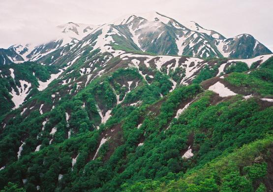 豪雪に磨かれた岩壁と高山植物の美しい新潟の名峰_a0113718_15151473.jpg