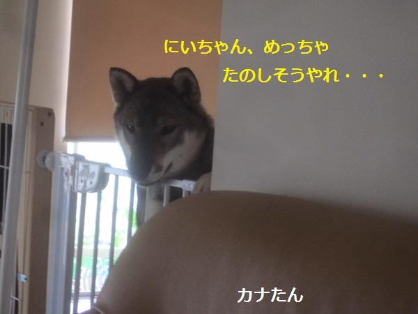 f0143123_16195668.jpg