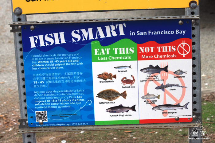 385 Fisherman\'s Park ~カリフォルニアのダイサギ~_c0211532_0324421.jpg