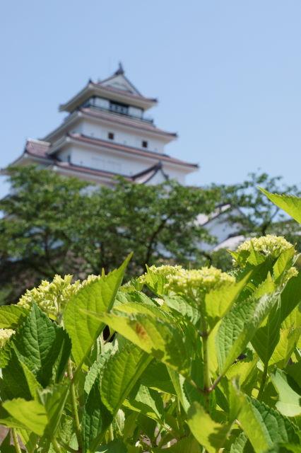 新緑の鶴ヶ城_a0257652_8533823.jpg