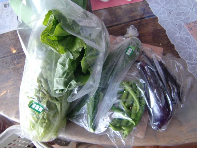 無農薬野菜販売中!_b0142752_1062112.jpg