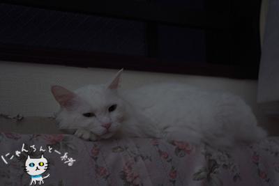 ミミちゃん 六月十八日_e0031853_14542953.jpg